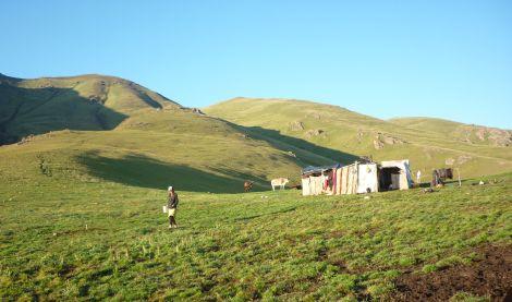A Kyrgyz jailoo